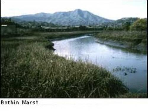 Bothin Marsh